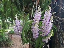 botanisk trädgård med orkidér Arkivfoto