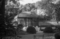 Botanisk trädgård på en solig dag i svartvitt Arkivbild