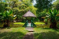 Botanisk trädgård Pamplemousses, Mauritius royaltyfri fotografi