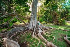 Botanisk trädgård Pamplemousses, Mauritius royaltyfria foton