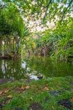 Botanisk trädgård Pamplemousses, Mauritius arkivbilder