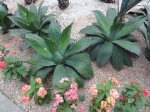 Botanisk trädgård - Toluca - Mexico fotografering för bildbyråer