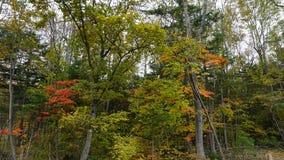 botanisk trädgård vladivostok Primorye Ryssland Arkivbilder