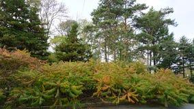 botanisk trädgård vladivostok Primorye Ryssland Royaltyfri Foto