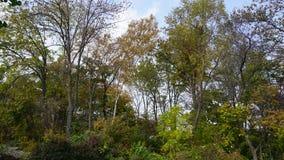 botanisk trädgård vladivostok Ryssland Royaltyfri Foto