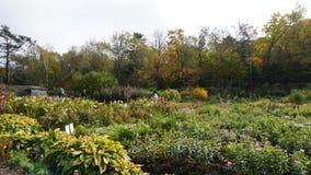 botanisk trädgård vladivostok Ryssland Arkivbilder