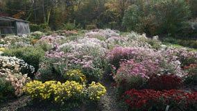botanisk trädgård vladivostok Ryssland Arkivbild