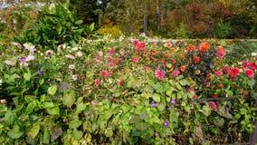 botanisk trädgård vladivostok Ryssland Royaltyfria Foton