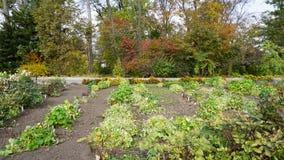botanisk trädgård vladivostok Ryssland Royaltyfri Fotografi