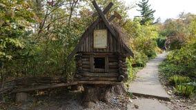 botanisk trädgård vladivostok Ryssland Arkivfoto