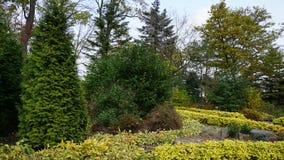 botanisk trädgård vladivostok Ryssland Arkivfoton