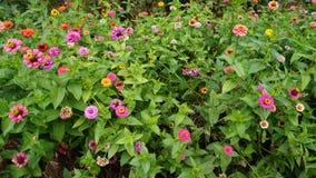 botanisk trädgård vladivostok Ryssland Fotografering för Bildbyråer