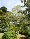 botanisk trädgård wellington Royaltyfri Fotografi