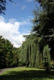 botanisk trädgårdireland national Arkivbilder