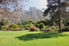 botanisk trädgårdkirstenbosch Arkivfoton