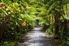 Botanisk trädgårdLaMaison folioark, Salazie, Reunion Island royaltyfri foto