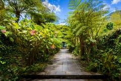 Botanisk trädgårdLaMaison folioark, Salazie, Reunion Island royaltyfri fotografi