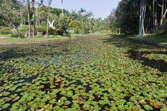 botanisk trädgårdpaulo sao Arkivfoto