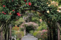 botanisk trädgårdträdgårdar steg Royaltyfri Bild