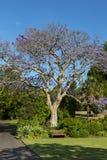 Botanisk trädgård Sydney Fotografering för Bildbyråer