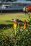 Botanisk trädgård Sydney Arkivbilder