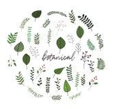 Botanisk uppsättning av vektorklotter gräs lämnar ängväxter floror stock illustrationer