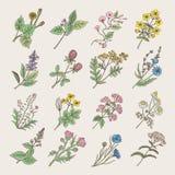 Botaniska örter och blommor Isolat för handteckningsbilder på vit bakgrund vektor illustrationer