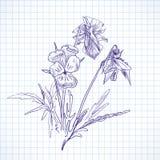 Botaniska blommor royaltyfri illustrationer