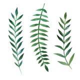 Botaniska naturliga beståndsdelar för vattenfärg royaltyfri illustrationer