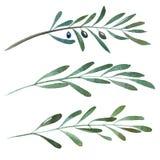 Botaniska naturliga beståndsdelar för vattenfärg stock illustrationer