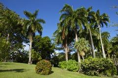 Botaniska trädgårdar Scarborough, Tobago Arkivfoton