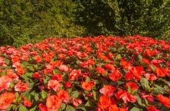 Botaniska trädgårdarna av den Trauttmansdorff slotten, Merano, Italien Fotografering för Bildbyråer