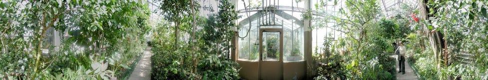 Botaniska trädgården - gömma i handflatan drivhuset, 360 grader panorama Royaltyfri Foto