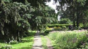 Botaniska trädgården på Vitebsken stock video