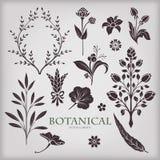 Botaniska vektorbeståndsdelar Arkivfoton