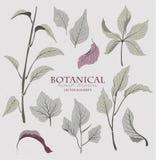 Botaniskt hand drog vektorbeståndsdelar Royaltyfri Fotografi