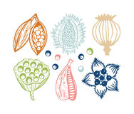 Botaniskt kort Arkivbilder
