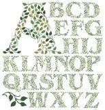 Botaniskt sidaalfabet royaltyfri illustrationer