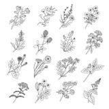Botaniskt skissa teckningar Vektorillustration av blommor och botaniska örter royaltyfri illustrationer