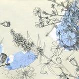 Botaniskt skissar royaltyfri illustrationer