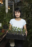 Botanist Carrying Potted Plants In Crate At Greenhouse. Portrait of young female botanist carrying potted plants in crate at greenhouse Royalty Free Stock Photo