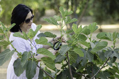 Botanist checking the growth of figs. Woman botanist checking the growth of figs on the tree with magnifying glass Royalty Free Stock Photo