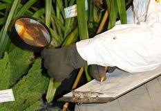 Botanist. Close up of botanist studying plants with magnifying glass Stock Image