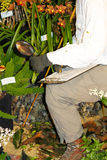 Botanist Royalty Free Stock Image
