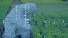 Botanist spraying plants. Full view of a botanist spraying plants. Graphs and equations are running in the foreground stock video