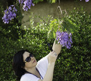 Botanist watching the jacaranda flowers. Woman botanist watching the purple flowers on the jacaranda tree with magnifying glass Royalty Free Stock Images