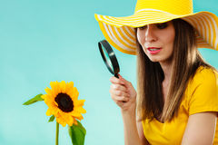Botanist woman with sunflower and magnifying glass. Botanist woman in yellow hat examining flower looking through magnifying glass on blue background Stock Photography