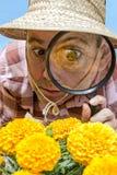 Botaniste Images libres de droits