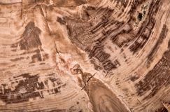 Botanolite落叶松属黑褐色纹理宏指令 免版税库存照片