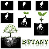 Botany Royalty Free Stock Photos